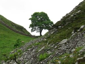 2012: On Hadrian's Wall path from Grindon to Haltwhistle.